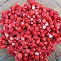 Самая вкусная ягода :: Ирина Романова