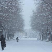 Зима пришла нежданно :: Valentina Zaytseva