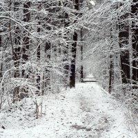 Зимняя аллея... :: Anatoley Lunov