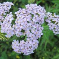 Цветы :: Александр Фомин