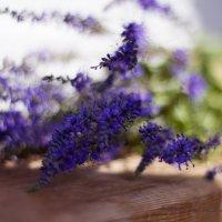 Цветы :: Лазарева Оксана