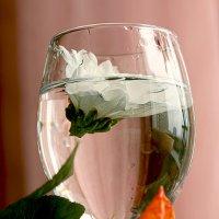Цветок в бокале :: Наталья Крюкова