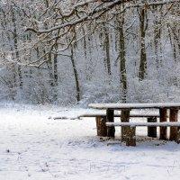 Столик в лесу :: Юрий Стародубцев
