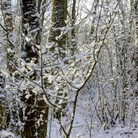 Снег на ветвях :: Юрий Стародубцев