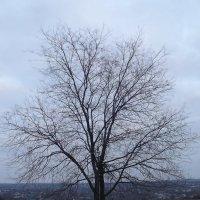 дерево :: Владимир Боровков