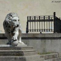 Воронцовский лев :: sv.kaschuk