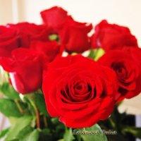 розы :: Юлия Лобанова
