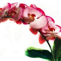 """""""Орхидея"""" :: Светлана"""