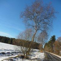 Деревья.Лес. :: ян серга