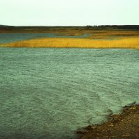 Осенью на озере Аслыкуль :: Olga Starshova
