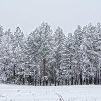 Вот такая зима :: Наталья Каравай