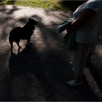 Собачка... :: Дмитрий Киселев