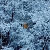 Свет в окошке :: Сергей Касимов