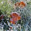 Первые заморозки :: Inga Engel