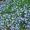 Море голубого :: Лидия (naum.lidiya)