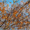Золотая Осень. :: Paparazzi