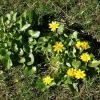 Два кустика в зелёной траве :: Нина Корешкова