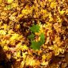 К солнышку! :: Надежда