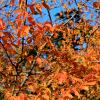 осень :: tina kulikowa