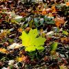 Осень на земле :: Надежд@ Шавенкова