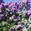 Буйное цветение :: Татьяна Лобанова