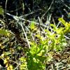 Степные травы :: Татьяна Королёва