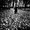Летний сад - 1 :: Алексей Кузнецов