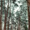 Зимний лес :: Вячеслав Кулаков