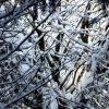 Волшебное дерево! :: Дмитрий Арсеньев
