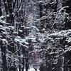 В зимнем парке :: Nikolay Monahov