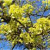 Весна-весна!!! :: Валерия Комова