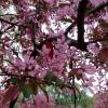 яблоневый сад в СПб :: Lyudmila