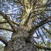 Дерево :: Иван Довыденко