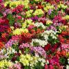 Разноцветье :: Сергей Беляев