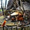 Гриб на спиле дерева. :: Михаил Столяров