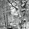 Зима :: Руслан