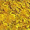 Листья жёлтые над городом кружатся. :: muh5257