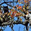 Ребята, по моему мои коты намылились улететь на юг! :: Восковых Анна Васильевна