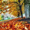 Золотая осень :: Алексей