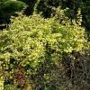 Ботанический сад, Барбарис обыкновенный :: Маргарита Батырева