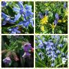 Весна в голубых цветах :: Nina Yudicheva