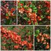 Весна в оранжевых цветах :: Nina Yudicheva