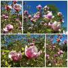 Весна в розовых цветах :: Nina Yudicheva