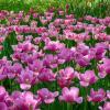 Фестиваль цветов :: Ольга