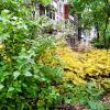 Осень пришла в город :: Елена Семигина