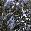 Неожиданно зима :: Егор