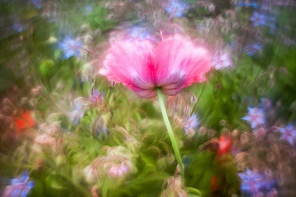 Садовые макро фото с красивым боке
