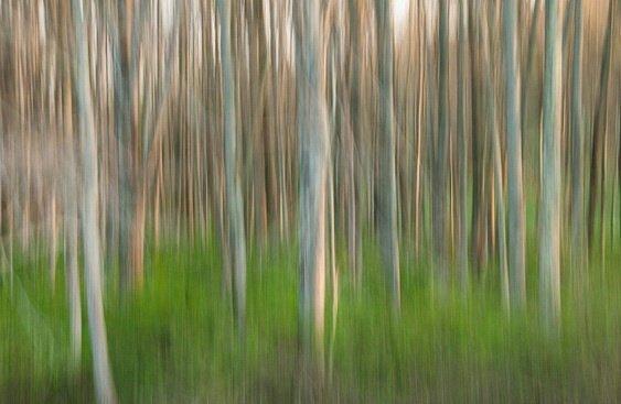 Абстрактные фото природы