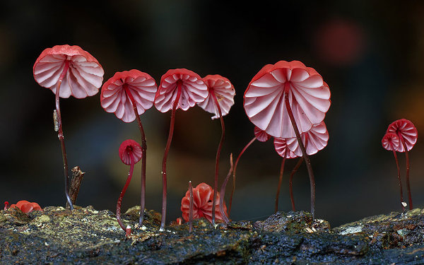 фотограф природы Стиф Эксфорд