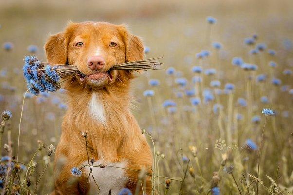 Как сделать снимок цветка необыкновенным